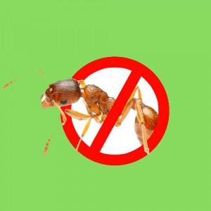 Средства от муравьев и слизней
