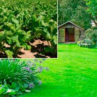 Трави газонні, кормові культури