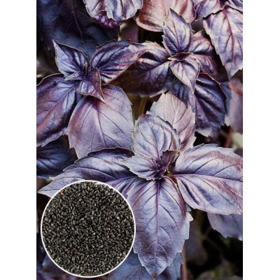 Базилік Фіолетовий ваговий (насіння) 1кг - оптом