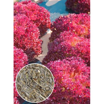 Салат Малиновый шар весовой (семена) 1 кг
