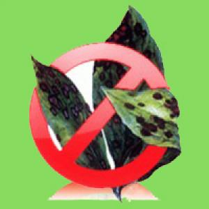 Засоби захисту від хвороб (фунгіциди) Агромаксі