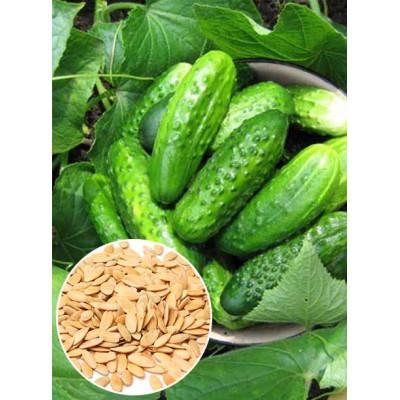 Огірок Водограй f1 ваговий (насіння) 1 кг - оптом