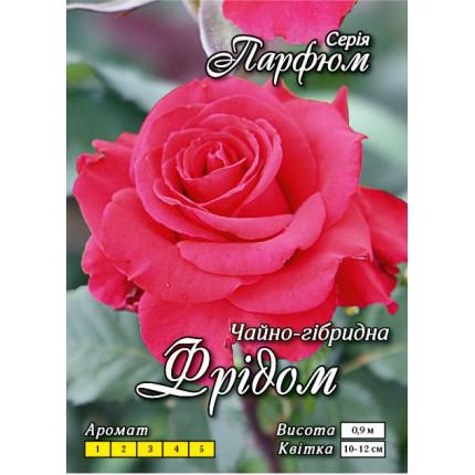 Троянда ч/г Фрідом (контейнер)