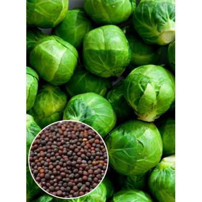 Капуста брюссельська Groningen вагова ( насіння) 1 кг - оптом