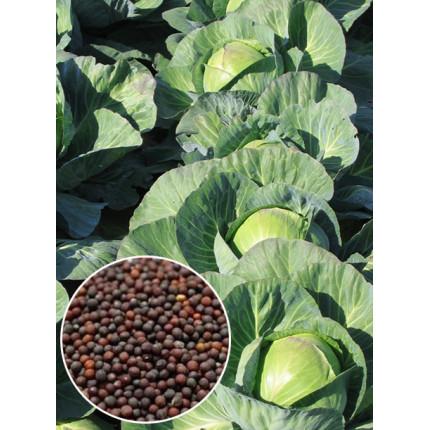 Капуста Амагер весовая (семена) 1 кг