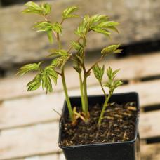 Растения в контейнерах (горшках)