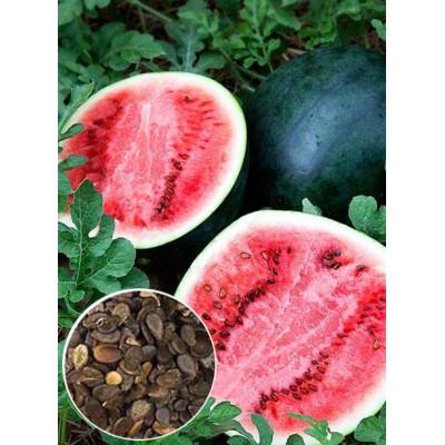 Кавун Цукровий малюк ваговий (насіння) 1 кг - оптом