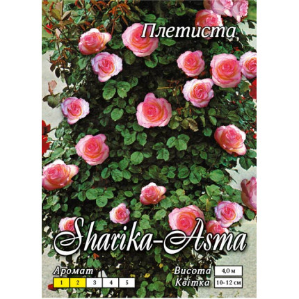 Троянда плетиста Шаріка-Асма клас А