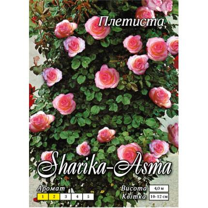 Роза плетистая Шарика-Асма класс А