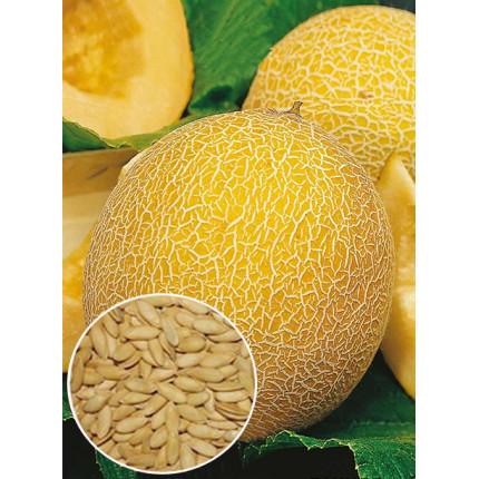 Дыня Леся весовая (семена) 1 кг