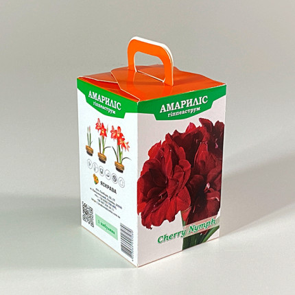 Гиппеаструм махровый Cherry Nymph 24/26 + КОРОБОЧКА