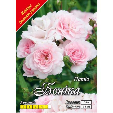 Троянда патіо Боніка (контейнер)