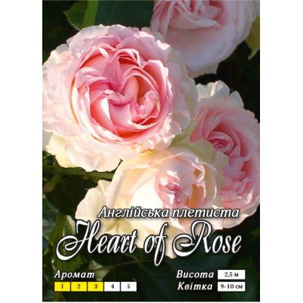 Троянда англійська плетиста Серце троянди клас А