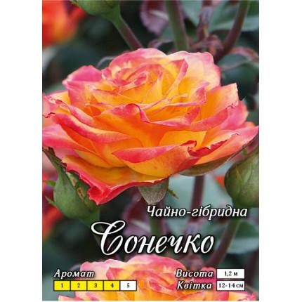 Троянда ч/г Сонечко (контейнер)