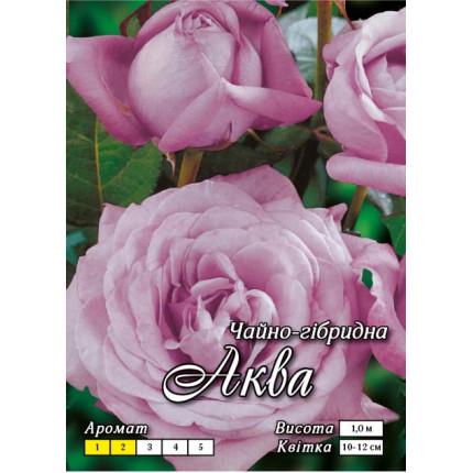 Троянда ч/г Аква клас А
