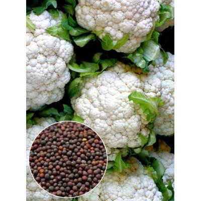 Капуста Цвітна Снігова куля вагова (насіння) 1 кг - оптом