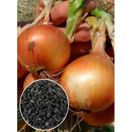 Лук Глобус весовой (семена) 1 кг