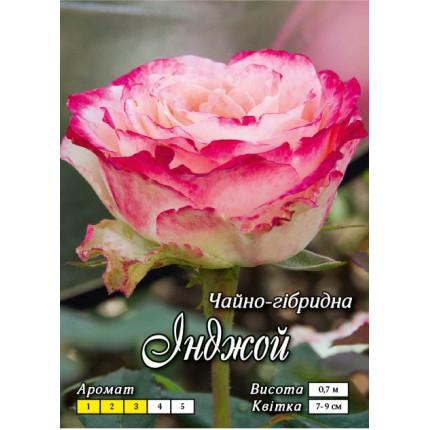 Троянда ч/г Інджой клас А