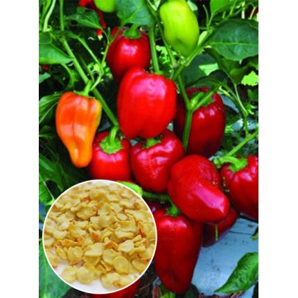 Перец Белоснежка весовой (семена) 1 кг