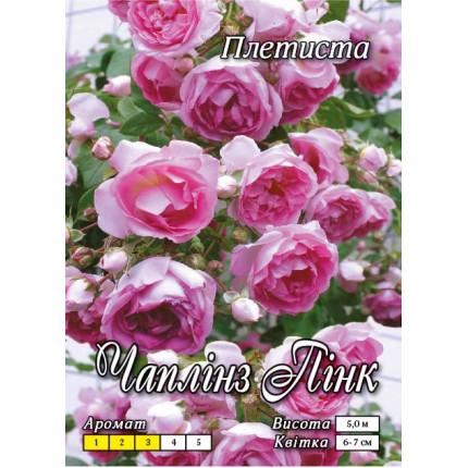 Троянда плетиста Чаплінз Пінк клас А