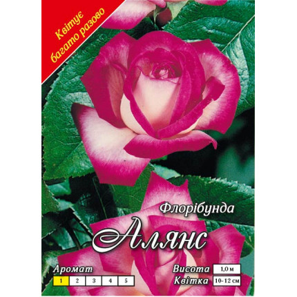 Троянда флорібунда Алянс клас А