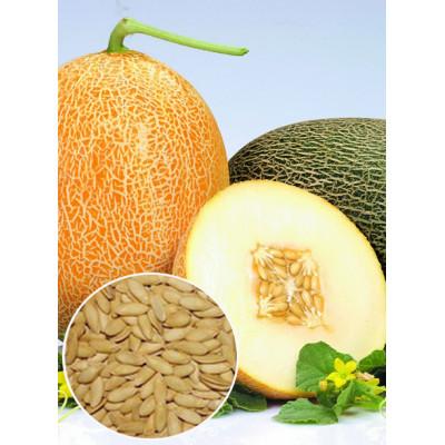 Диня Карамелька вагова (насіння) 1 кг - оптом
