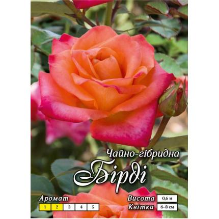 Троянда ч/г Бірді клас А