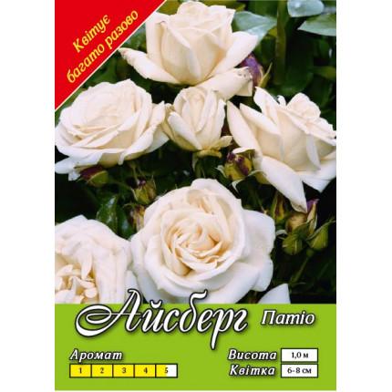 Троянда патіо Айсберг клас А