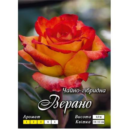 Троянда ч/г Верано (контейнер)