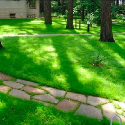 Трава газонная Теневой газон 1 кг