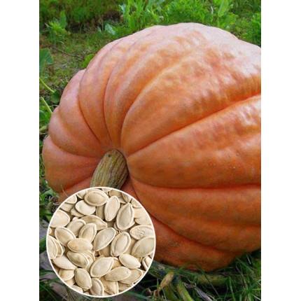 Гарбуз Стофунтовка ваговий (насіння) 1 кг