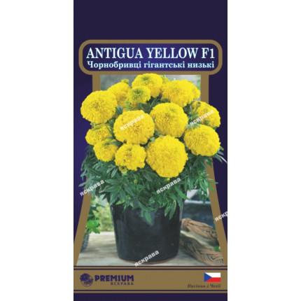 Чорнобривці низькі Antigua Yellow  F1 5 нас в оболонці
