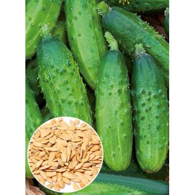 Огірок Анулька f1 ваговий (насіння) 1 кг - оптом