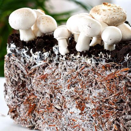 Шампиньон двуспоровый 50 г (мицелий грибов)