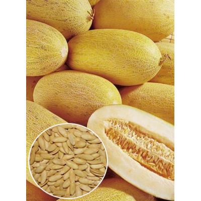 Диня Медова вагова (насіння) 1 кг - оптом