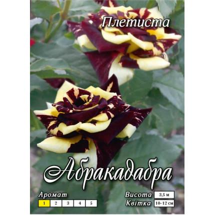 Роза плетистая Абракадабра класс А