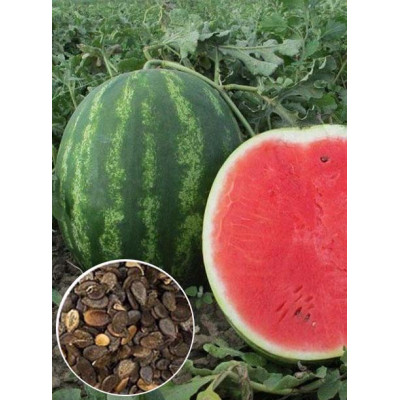 Кавун Талісман F2 ваговий (насіння) 1 кг - оптом
