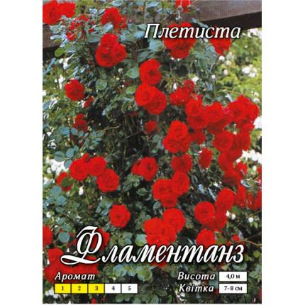 Роза плетистая Фламентанц  класс  А