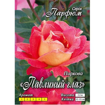 Троянда паркова Павине око  клас АА