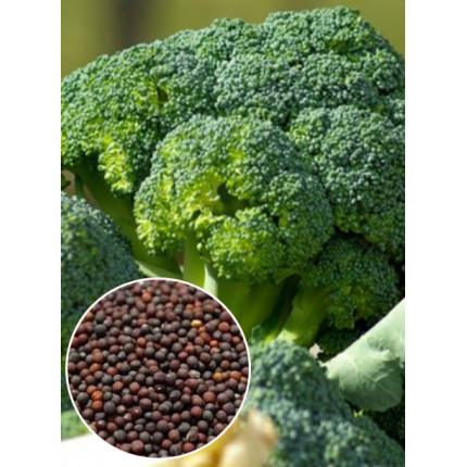 Капуста брокколи  Ramoso весовая (семена) 1 кг