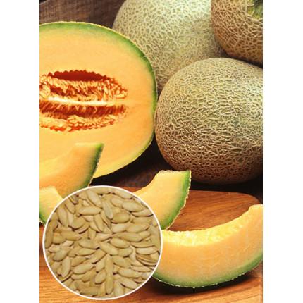 Дыня Лада (медовый аромат) весовая (семена) 1 кг