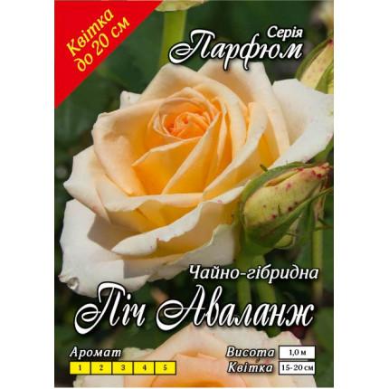 Троянда ч/г Піч Аваланж (контейнер)