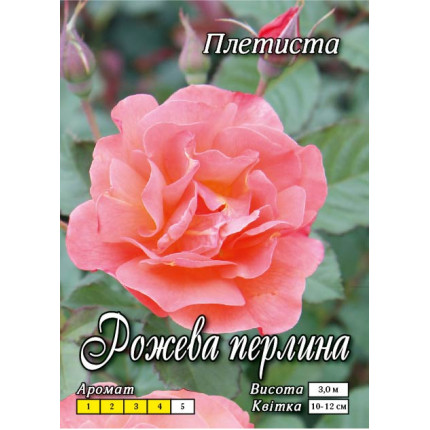 Троянда плетиста Рожева Перлина клас А