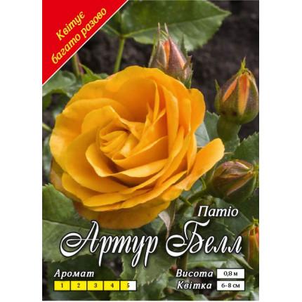 Троянда патіо Артур Белл (контейнер)