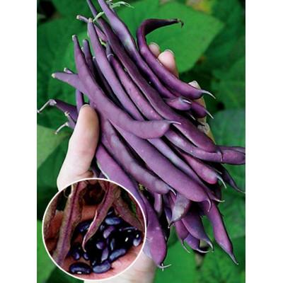 Квасоля Блаухільде вагова (насіння) 1 кг - оптом