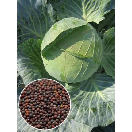 Капуста Дитмаршер весовая (семена) 1 кг