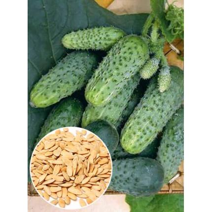 Огурец Соплица f1 весовой (семена) 1 кг