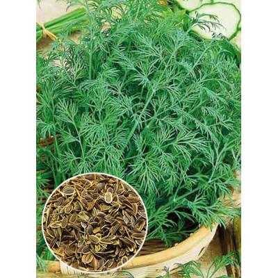 Кріп Амброзія ваговий (насіння) 1 кг - оптом