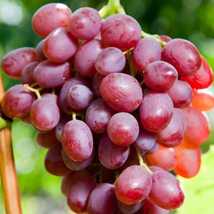Виноград Лівія (упаковка-пакет)