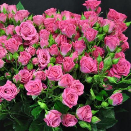 Роза спрей Лавли Лидия (Lovely Lidia)  класс  А